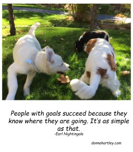 goals and dogs