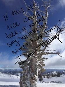 Squaw Tree